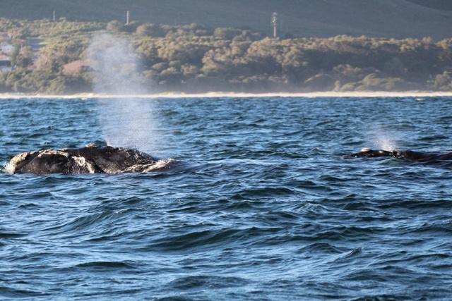 Un par de ballenas