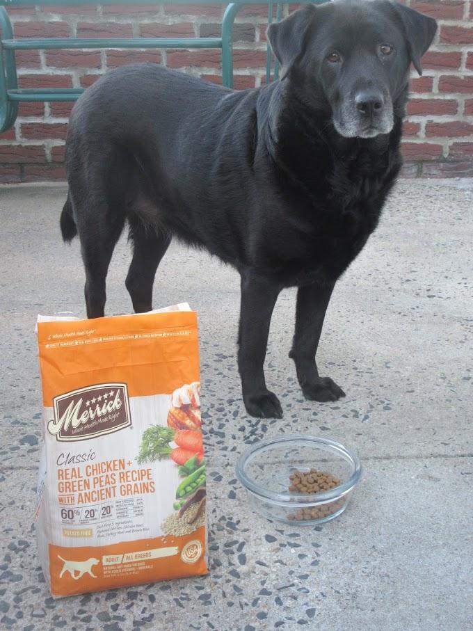 Why Your #BestDogEver Deserves Merrick Classic Dog Food