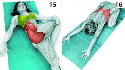 Los estiramientos, con imágenes del músculo relacionado