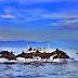 Pantai Lovina, Obyek Wisata di Bali Untuk Bertemu Lumba-lumba Langsung di Habitatnya