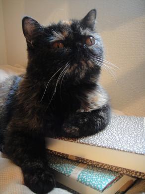 東小金井ペット・クリニック-犬猫うさぎ鳥など小動物の動物病院