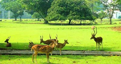 dan sekitarnya sungguh manis dan menarik minat banyak wisatawan dari banyak sekali daerah 10 Daerah Wisata Cantik Dan Menarik  Di Bogor