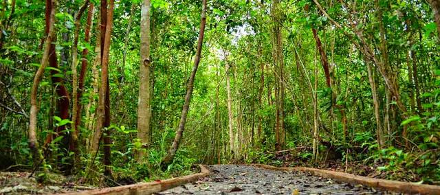 Gambar ilustrasi hubungan antara iklim dengan vegetasi alam
