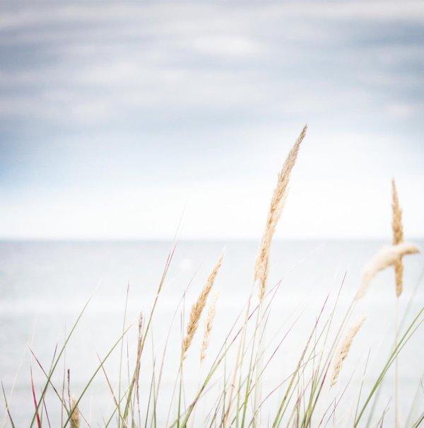 Seegras am Strand - Meeresbrise by titatoni.de