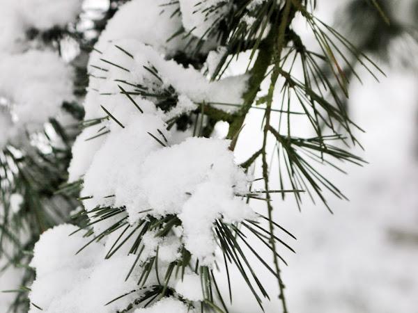 J'ai photographié l'hiver (derrière chez moi)