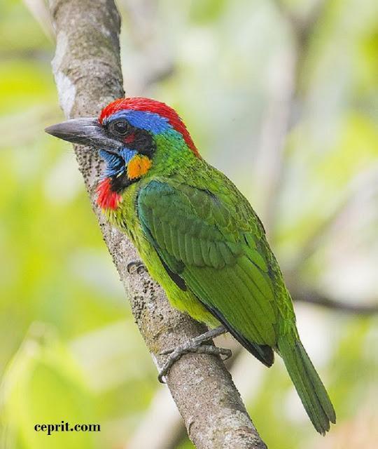 Arti Pertanda dan Firasat dari Binatang Unggas dan Burung Menurut Primbon Jawa