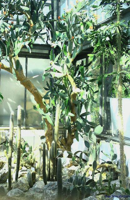 Gajenje kaktusa