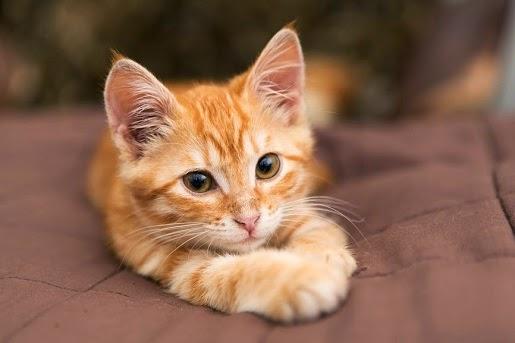 Felinoterapia, czyli terapia z udziałem kota