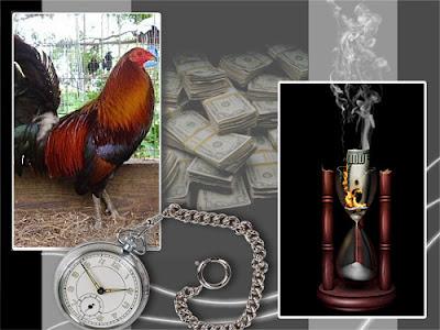 gallo en cuadro