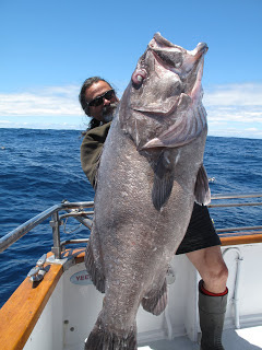 Big Fishes Of The World Hapuka Polyprion Oxygeneios