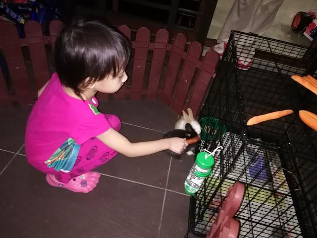 Tengok Arnab Kat Rumah Cousin