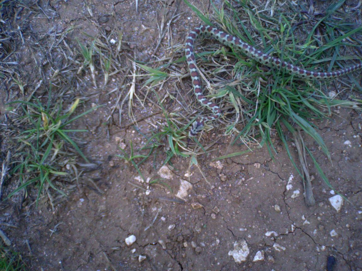 Come scacciare serpi e vipere dal giardino con rimedi - Come uccidere i topi in casa ...
