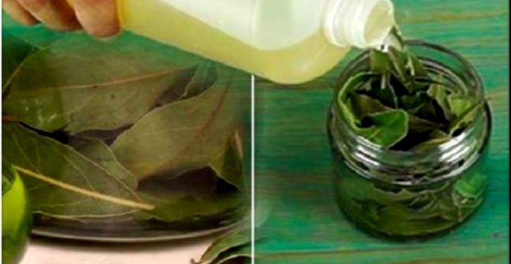 The Bay Leaf Is A Blessing Of God: It Fights Against High Blood Pressure, Fatigue, Diabetes And Many Other Diseases