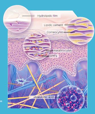 [388.] Bariera hydrolipidowa skóry