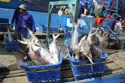 Suasana Bongkar Ikan di Pelabuhan Muara Angke Jakarta Utara