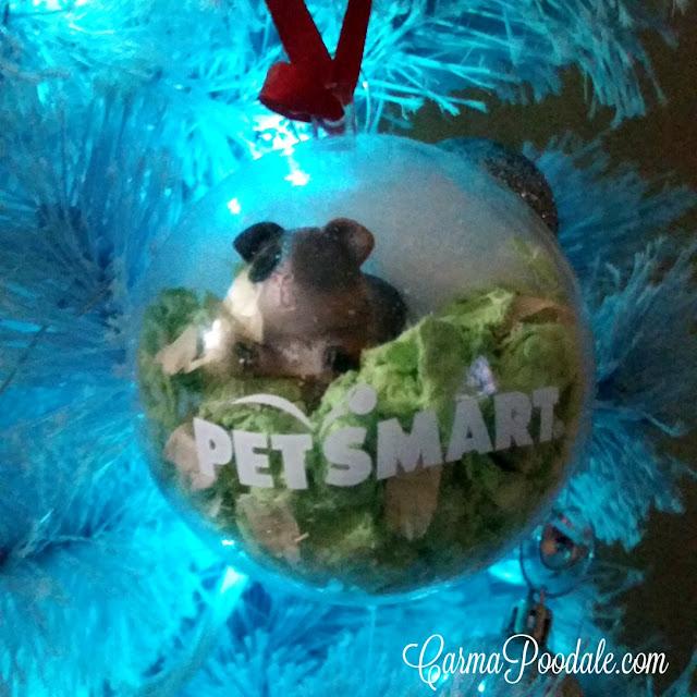 #PetSmart #Christmas Ornament with calico guinea pig statue- CarmaPoodale.com