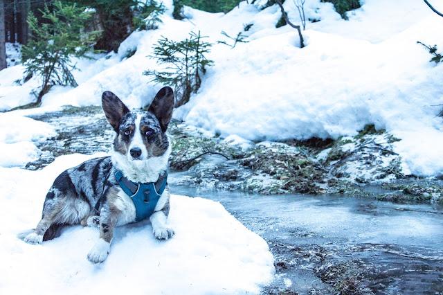 Karkonosze z psem, podróże z psem, z psem w góry