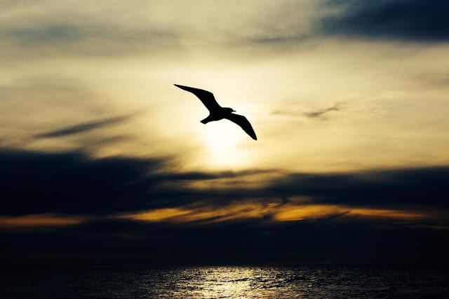 pássaro voando, liberdade