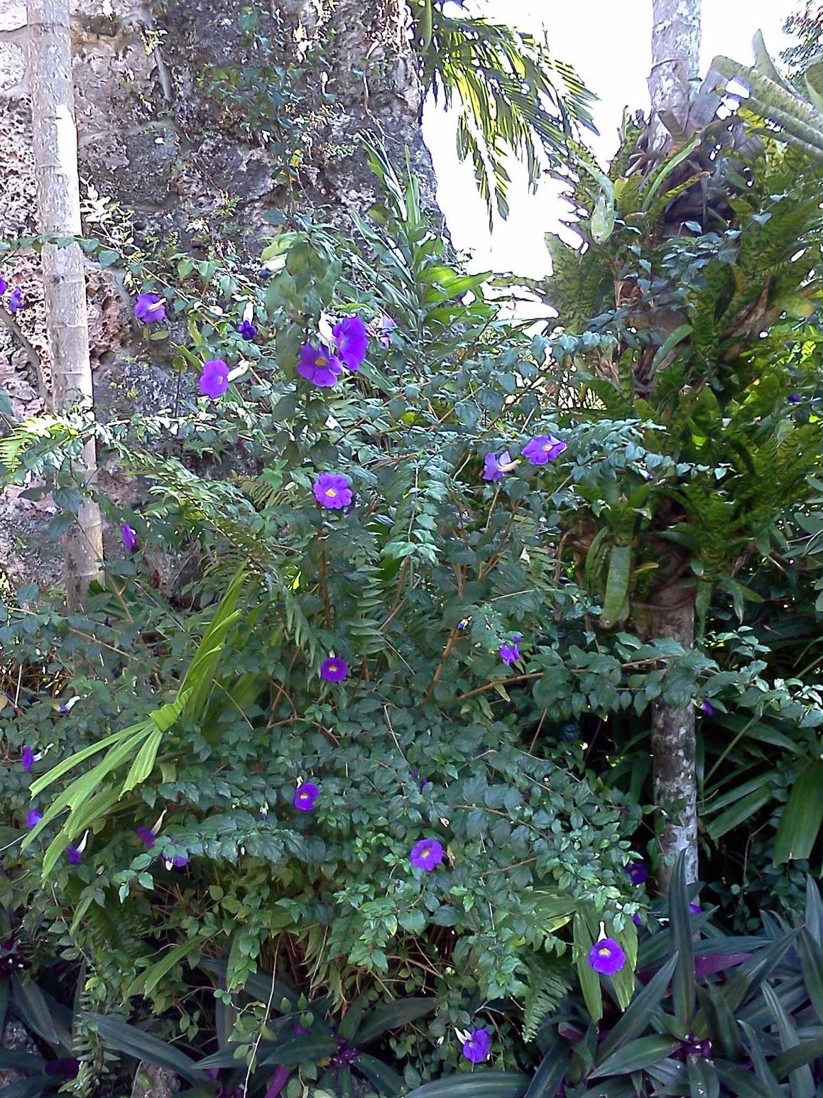 Gardening South Florida Style: South Florida Hedge Plants v.I