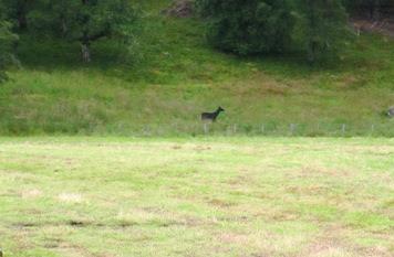 Metal deer on a walk around Deeside