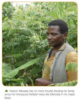Growing Fertilizer Trees in Malawi