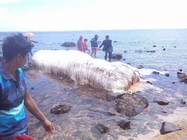 The Legendary Trunko Sea Monster Washed Ashore In The Philippines