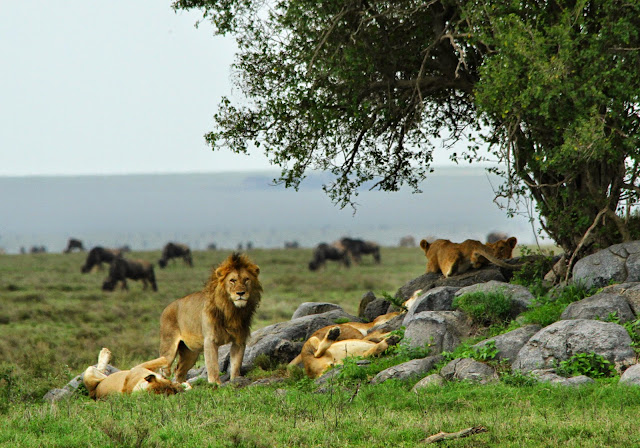 Os melhores PARQUES NACIONAIS EM ÁFRICA para observar Vida Selvagem