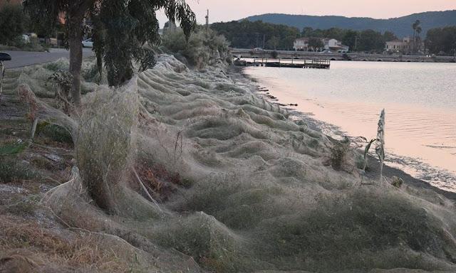 Απίστευτες εικόνες: Ιστός από αράχνες κάλυψε ολόκληρη παραλία