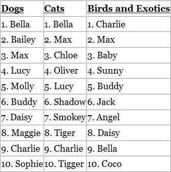 Pets Name Of Dogs Barking Dog Complaint Letter Sample