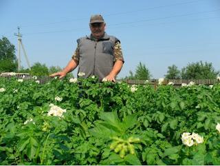 Агротехника в защите растений