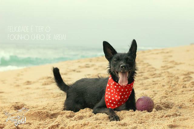 obrigado por tratar bem do seu cão, brincadeiras caninas, bola, coleira, blogue de casal, Ela e Ele, Ele e Ela