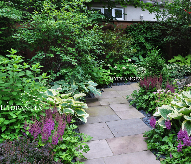 Relatively Three Dogs in a Garden: Hydrangeas: Care Basics/ Old & New Varieties UQ81