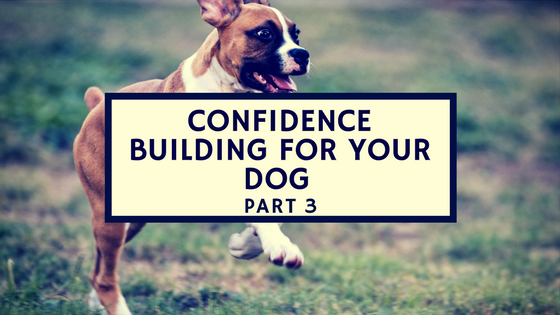 Confidence building puppies