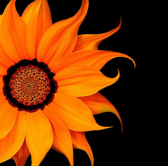 HD WALLPAPER: Beautiful HD Flower Wallpaper(High