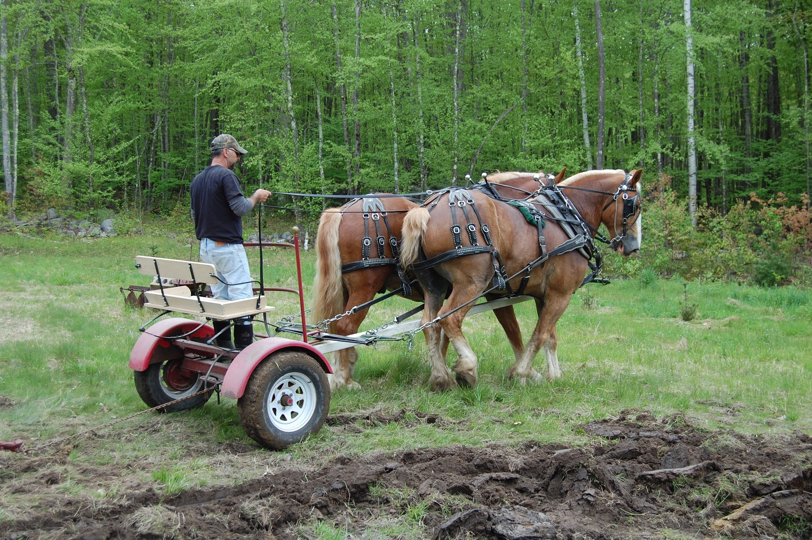 Hooves and Hounds Farm: Plow Day at The Abenaki Draft ... - photo#23