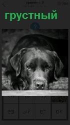 морда собаки грустная на лапах