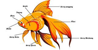 Cara Bergerak Ikan