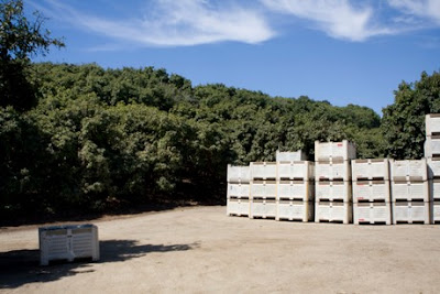 Palots-cosecha-aguacates
