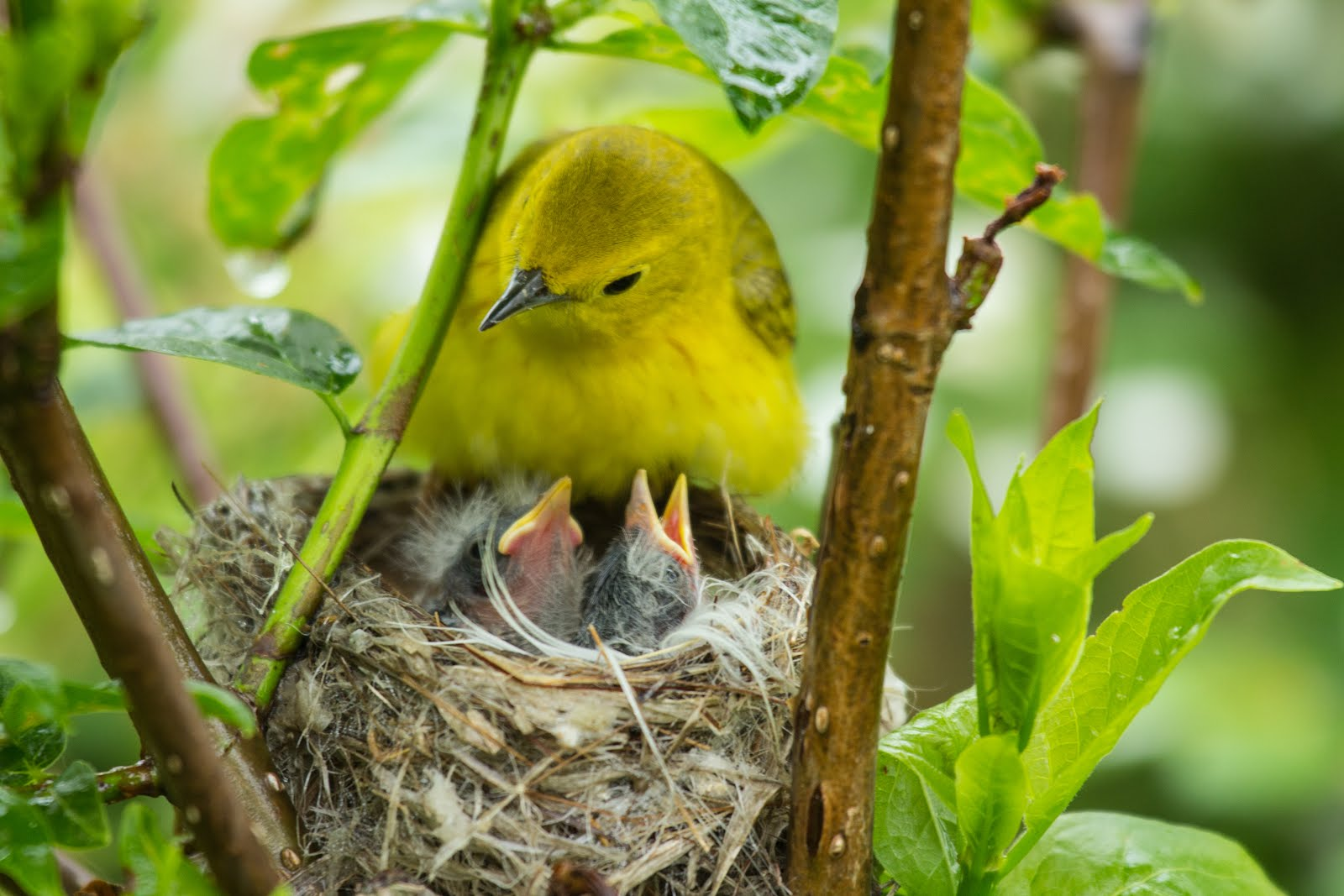 FREE! July 1 Program: Nesting Birds