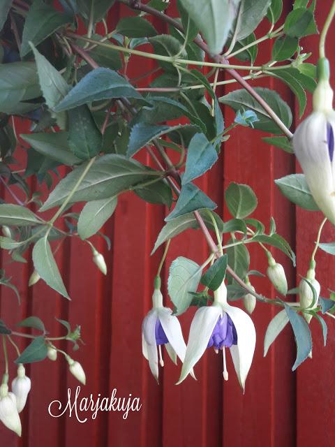 verenpisara blue sarah kukkii