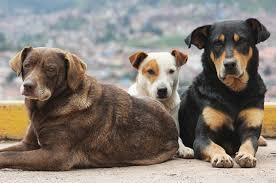 Δήμος Σαρωνικού : Πρόγραμμα προστασίας αδέσποτων ζώων για το 2017