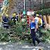 Falling tree 'kills 11 in Madeira'
