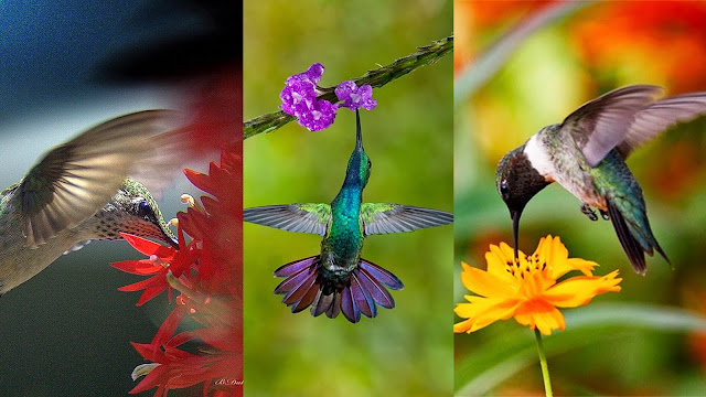 Hummingbirds searching sugar food in flower leaves
