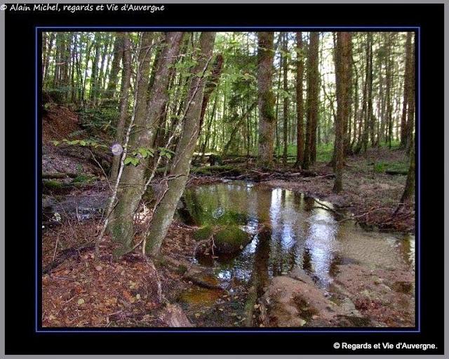 forêt, sous-bois, été, ombre