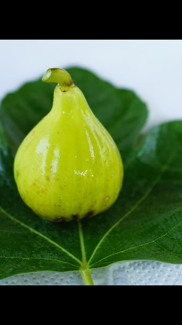 JH ADRIATIC Figs
