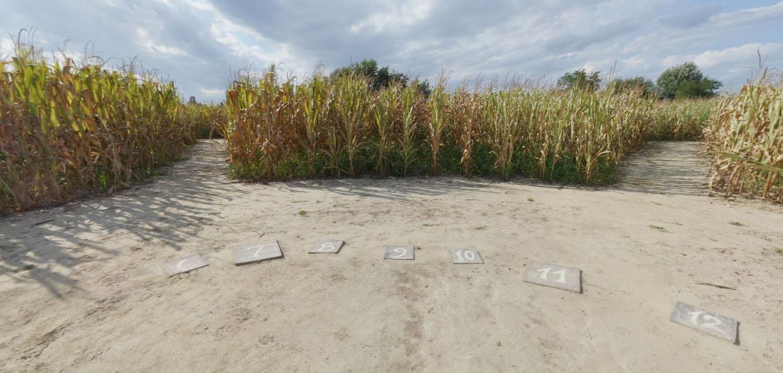 Il labirinto di mais ad alfonsine ra di carlo galassi for Labirinto alfonsine