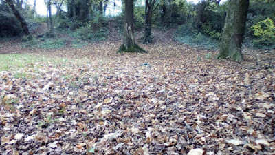 How to make leaf mould The Green Fingered Blog