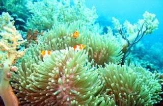 Wisata Bahari di Pulau Bulupoloe