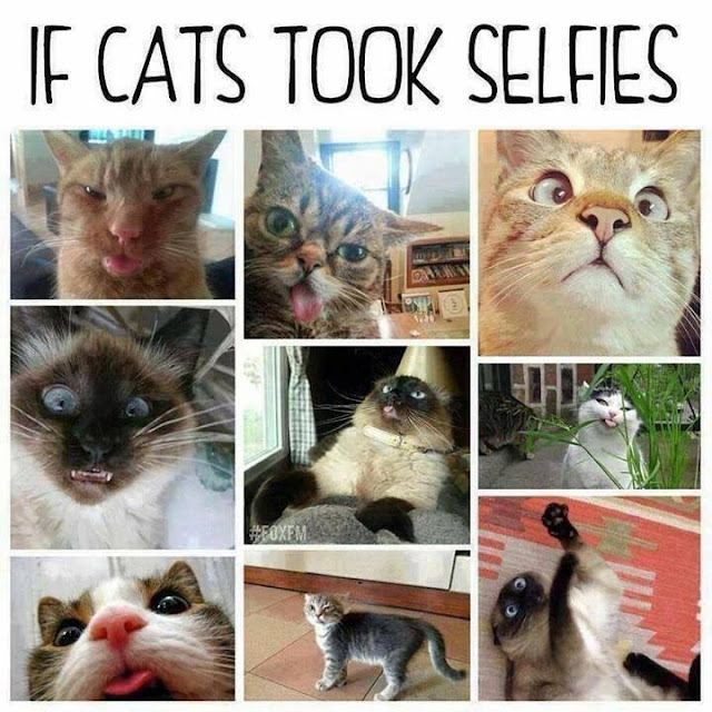 If Cats Took Selfies, cat selfies, funny cat, cat meme, funny cat meme