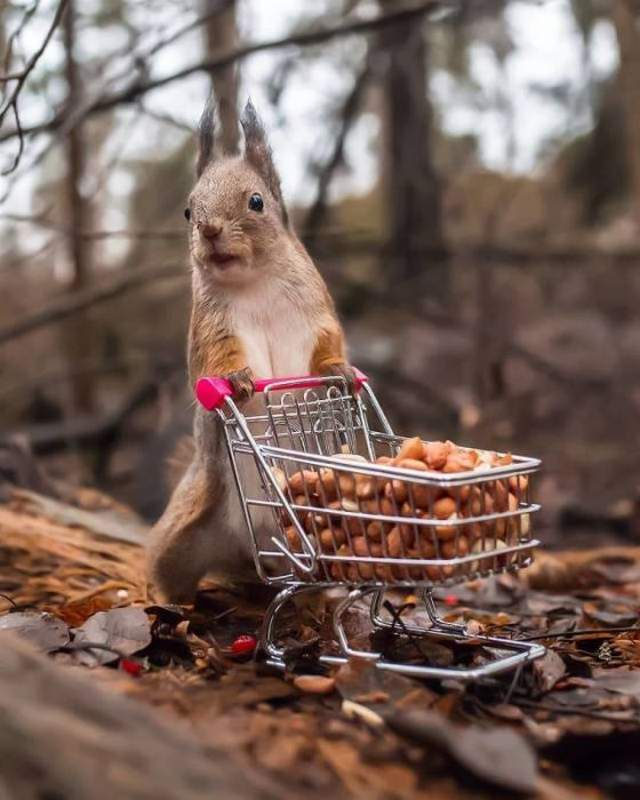 Funny animals of the week - 11 May 2018, funny cute animals, best animal photo, adorable animals